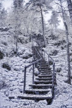 Russian photographer Akira Katran. stunning color, extraordinary, beautiful, high ladder, steep staircase, stairs in the forest, winter garden, winter garden, ice fairy tale, fairy-tale place, the snow Queen, a pine forest, snow, stairs, railings, rise up,  Akira Katran Project, vk.com/club6280821
