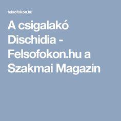 A csigalakó Dischidia - Felsofokon.hu a Szakmai Magazin