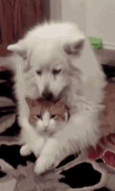 cat animals dog animal friendship trending #GIF on #Giphy via #IFTTT http://gph.is/1QGBu41