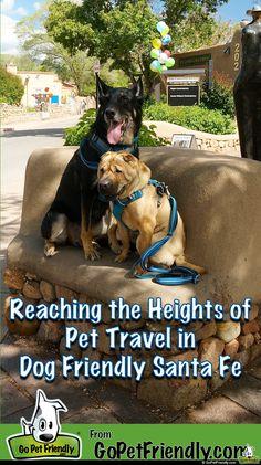 Dogtoberfest New Pet Friendly Hotel Ella Come To Austin Your