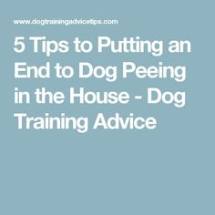 5 Tips to Putting an End to Dog Peeing in the House - Dog Training Advice