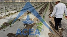 El ecotúnel es el más sencillo y económico de los invernaderos, con mayores cualidades que macrotúneles o casa sombra.