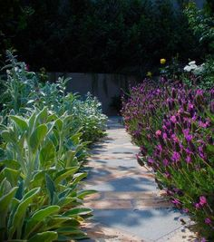 07: kirschlorbeer 'genolia' / prunus laurocerasus 'genolia' – eine, Gartenarbeit ideen