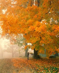 Morning Mail (Cambridge, Vermont) by George Robinson on 500px