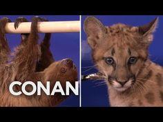 Animal Expert David Mizejewski: Sloth & Cougar Kitten - CONAN on TBS - YouTube