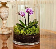 Low Light Orchids for terrarium Orchid Terrarium, Succulent Terrarium, Moth Orchid, Orchid Care, Miniature Orchids, White Flower Farm, Decoration Plante, Paludarium, Deco Floral