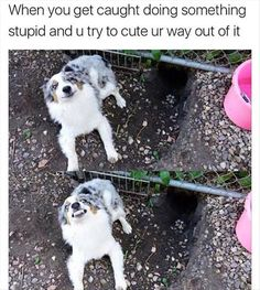 Funny and Great Dog Memes That will Make You Laugh. Here are 45 funny happy dog memes that will brighten your Funny Animal Memes, Dog Memes, Cute Funny Animals, Funny Animal Pictures, Funny Cute, Funny Dogs, Funny Memes, Animal Funnies, Funny Comedy