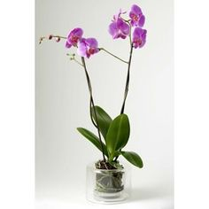 1000 images about orqu deas on pinterest orchids black - Maceta para orquideas ...