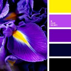 amarillo vivo, amarillo vivo y violeta, amarillo y violeta, color berenjena, color higo, combinación de colores, de color malva, elección del color, morado, selección de colores, violeta rosado.