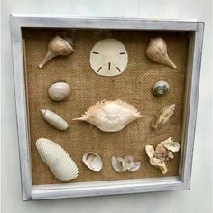 Nautical Seashell Magnets- nautical sand dollars sand dollar nautical home decor seashells shells magnets muscle shells home decor