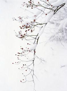 winter ☃