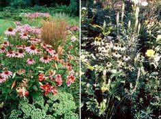 Fler sköna perennrabatter med Echinacea. Till vänster syns kärleksörten och till höger är kombinationer med vita solhattar.