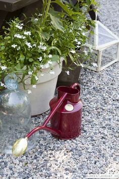 Garden flow Shop - Haws vattenkanna 1 liter Indoor - Burgundy