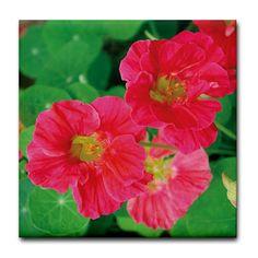 Nasturtium Cherry Rose Jewel Tile Coaster