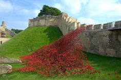 Wave of poppies,Lincoln