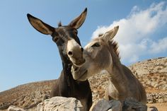 Donkeys in love by Klearchos Kapoutsis, via Flickr