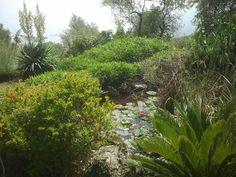 Nel parco del casale vi è un laghetto, con i pesci e le ninfee