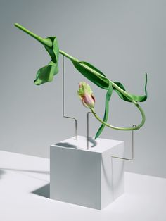 We always been a fan and have been following the work of Carl Kleiner for a long time now. Here is one his latest personal project called 'Postures'. While a cut flower is meant to die but in their final moments, these tulips are making art.