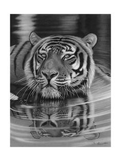 Giclee Print: Cool for Cats by Stephen Ainsworth : 24x18in