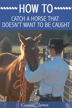 Here's how to get a horse to willingly walk up to you when you come into the pasture with a halter. Tip: It doesn't involve a treat! One of the most useful horse training tips out there.