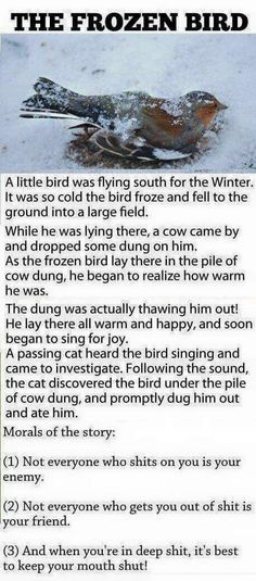 Pet Bird Quotes Thoughts 48 New Ideas Funny Stories With Morals, Good Moral Stories, Stories With Moral Lessons, Stories For Kids, Short Stories With Moral, Inspirational Short Stories, Motivational Stories, Morals Quotes, Humor Quotes