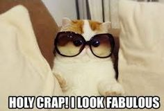 I look fabulous. 😎 Happy National Cat Day to you all. I Love Cats, Cute Cats, Funny Cats, Funny Animals, Cute Animals, Animal Funnies, Cutest Cats Ever, National Cat Day, Cat Sunglasses