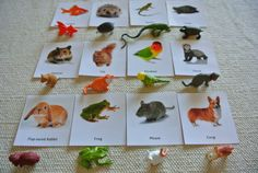 Montessori Common Pets 3 Part Card with Miniatures