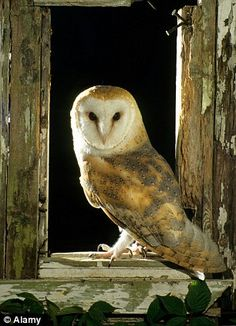Police are looking into a viewer complaint that Countryfile disturbed the barn owls, which are protected under special DEFRA licences