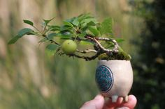 Mame bonsai: even smaller than Shohin, which is smaller than Bonsai. Bonsai Art, Bonsai Plants, Bonsai Garden, Garden Plants, Bonsai Trees, Mini Fairy Garden, Dream Garden, Ikebana, Vine Fruit