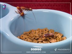 Cockroach Control, Roaches, Pest Control Services, Health And Safety, Ethnic Recipes, Management, Food, House, Ideas