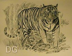 T24 Ustaad the tiger of Ranthambore. Inspired by originals of Vijaybabu kaliappan.