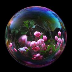 Bubble blossom by mistissimo on Flickr.