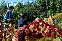Super moment ensoleillé et odorant au jardin botanique d'Yves Rocher (vous savez, les cosmétiques)… Après les photos du monde entier dans les rues de La Gacilly, un pas de côté dans l&r…