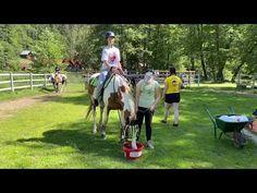 Zážitkové letní tábory 2020 na koních s bohatým programem: jízda na koních, čtyřkolky, paintball, paddleboardy, potápění, bungeerunning... Paintball, Horses, Youtube, Animals, Animales, Animaux, Horse, Animal, Animais
