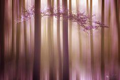 Lavender Dream by ildiko-neer.deviantart.com on @DeviantArt