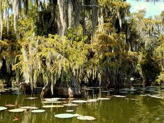 """""""Swamp II"""" by Beth Vincent"""
