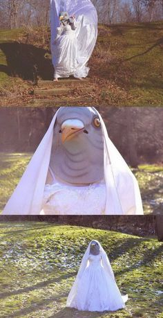 WTF Pics That Require an Explanation Pics) - aptitud Weird Pictures, Reaction Pictures, Funny Images, Funny Photos, Pigeon Funny, Pigeon Meme, Awkward Funny, Bizarre, Cursed Images