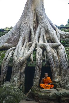 Buddhist monk meditates under a tree in Ta Phrom Temple. Angkor Wat, Cambodia