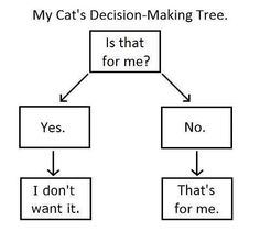 somebody knows cats....