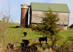 Lexington, VA ... still a home for the cows