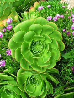 ~~ succulent garden ~~