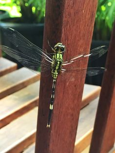 Dragon fly joining us for lunch one fine afternoon. Dragon, Lunch, Random, Lunches