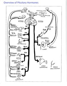 View thousands amazing images on gallerily hormone pinterest functions of the pituitary gland would have been helpful for my last exam ccuart Gallery