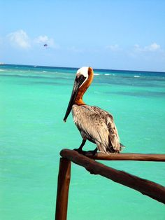 Animals to spot on your vacation
