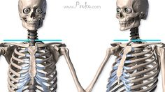In this episode we'll go over the simple structure and the anatomical details of both the clavicle and scapula.