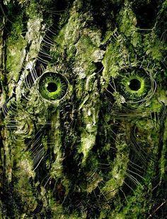 Forest King, Leszek Kostuj