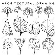 Set Of Architectural Hand Drawn Trees: Vector Illustration ...