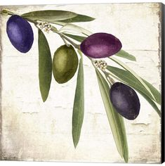 Trademark Art 'Olive Branch IV' by Color Bakery Painting Print on Wrapped Canvas Painting Prints, Fine Art Prints, Branch Art, Olive Tree, Canvas Artwork, Botanical Illustration, Online Art, Graphic Art, Original Art