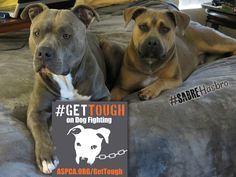 April 8 Is National Dog Fighting Awareness Day