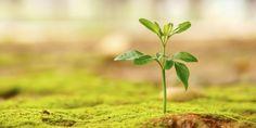 5 motivi scientifici per essere ottimista